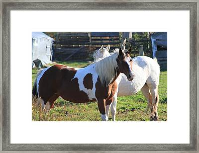 Horses Framed Print by Mike Stouffer