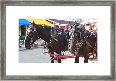 Horses Of Mackinac Framed Print by Michael Carrothers
