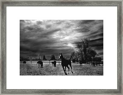 Horses Running Black White Surreal Nature Landscape Framed Print by Kathy Fornal
