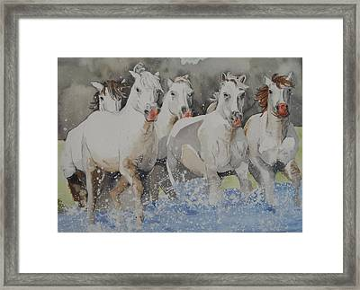 Horses Thru Water Framed Print