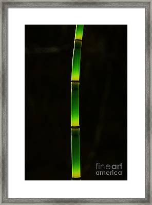 Horsetail  Framed Print