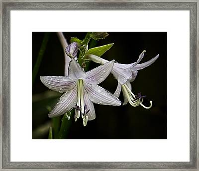 Hosta Front And Center Framed Print by Michael Putnam