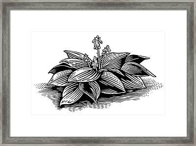 Hosta, Lino Print Framed Print