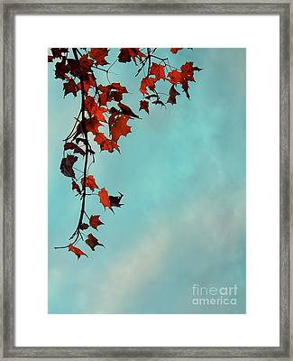 Hot And Cold Framed Print by Aimelle