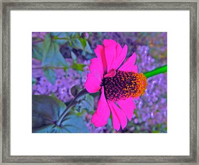 Hot In Pink Framed Print by Randy Rosenberger