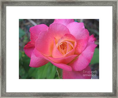 Hot One Framed Print