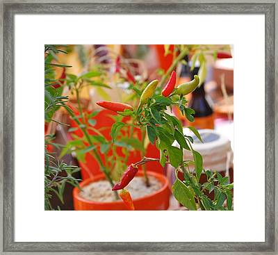Framed Print featuring the photograph Hot Peppers by Mary McAvoy