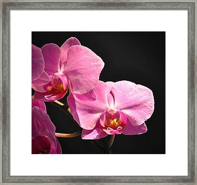 Framed Print featuring the photograph Hot Pink Orchids by Ronda Broatch