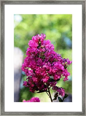 Hot Pink Framed Print by Toni Hopper