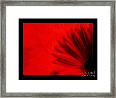 Hot Red Gerber Daisy Framed Print by Marsha Heiken