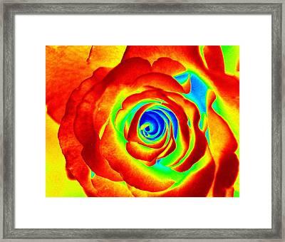 Hot Rose Framed Print