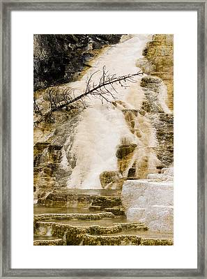 Framed Print featuring the photograph Hot Spring Pine by J L Woody Wooden