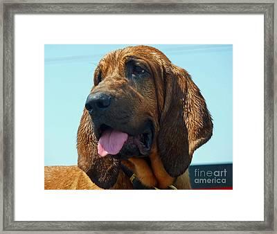 Hound Dog Framed Print