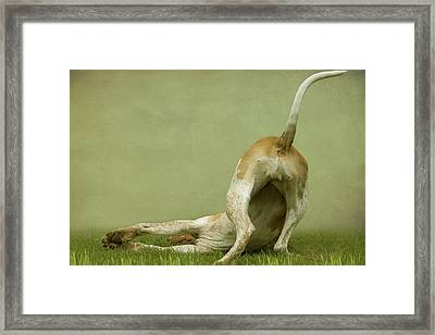 Hound Dog Bottom Framed Print by Ethiriel  Photography