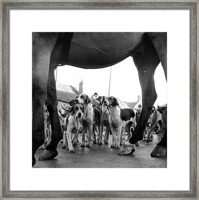 Hounds And Horse Framed Print by John Chillingworth