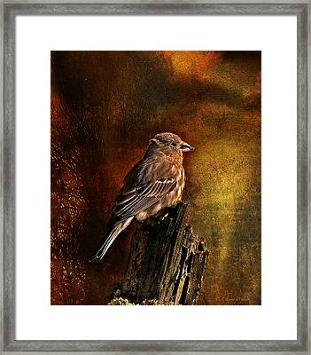House Finch With Sunflower Seed Framed Print
