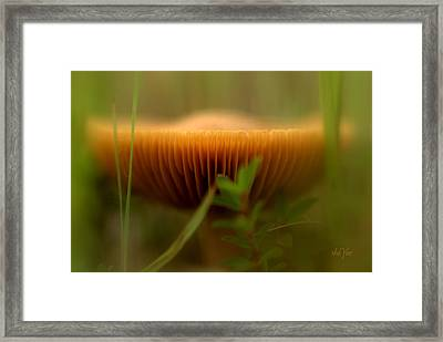 House Of Faires Framed Print