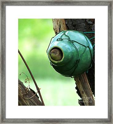 House Wren Framed Print by Deborah Johnson