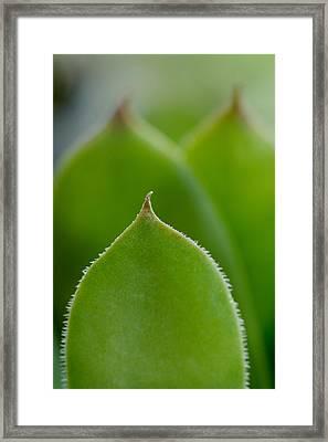 Housekeeper's Leaf Framed Print