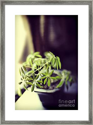 Houseplant Framed Print by HD Connelly