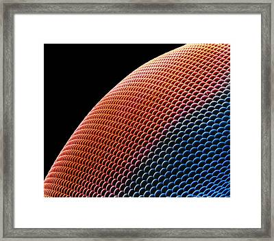 Hover Fly Eye, Sem Framed Print by Susumu Nishinaga