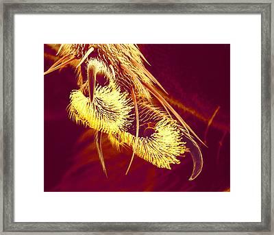 Hover Fly Foot, Sem Framed Print by Susumu Nishinaga