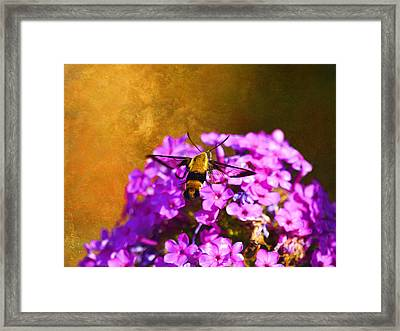 Hovering Clearwing Framed Print by J Larry Walker