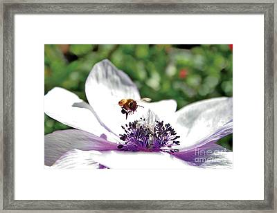 Hovering Framed Print by David Taylor