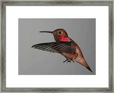 Framed Print featuring the photograph Hovering Or Standing On Air by Gregory Scott