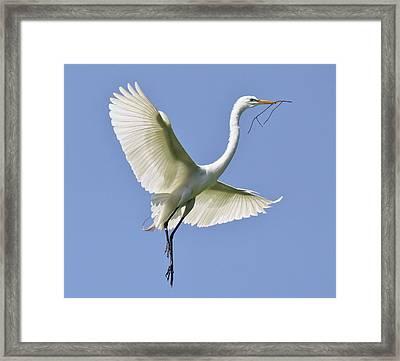 Hovering Framed Print by Paulette Thomas
