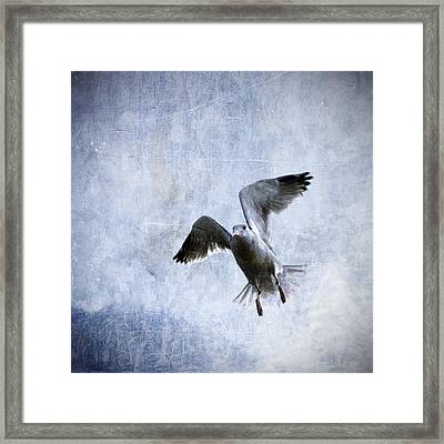 Hovering Seagull Framed Print by Carol Leigh