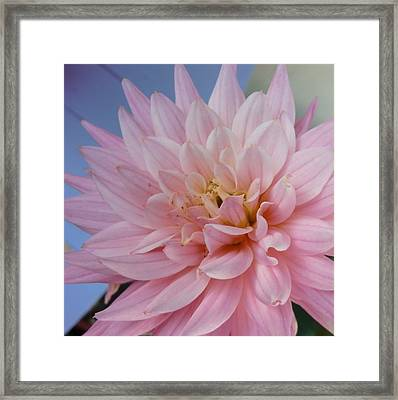 How Are You Framed Print