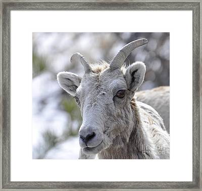 How Close Is Too Close Framed Print