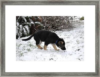 How Does Snow Smell Framed Print by Tanya  Searcy