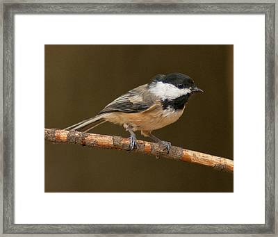 How Is This Pose Framed Print by Don Wolf