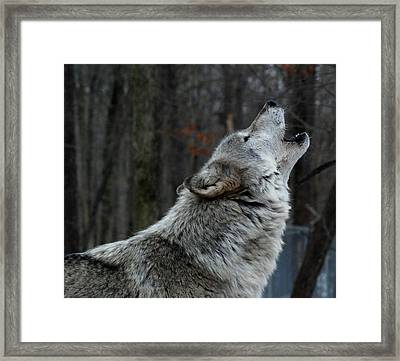 Howling Tundra Wolf Framed Print