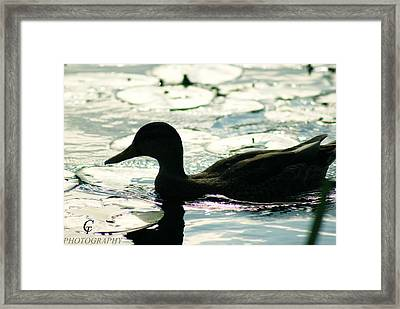 How's Life Going... Framed Print by Carolina Artemis Tamvaki