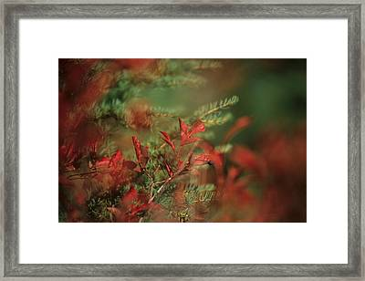 Huckleberry Leaves In Fall Color Framed Print by One Rude Dawg Orcutt