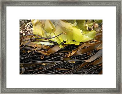 Hug Point Algae Framed Print