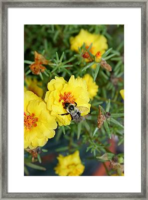 Framed Print featuring the photograph Hugging The Flower by Paula Tohline Calhoun