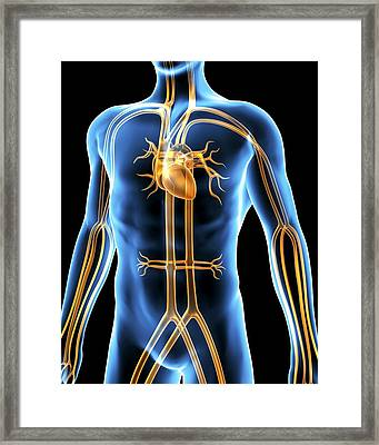 Human Cardiovascular System, Artwork Framed Print by Pasieka