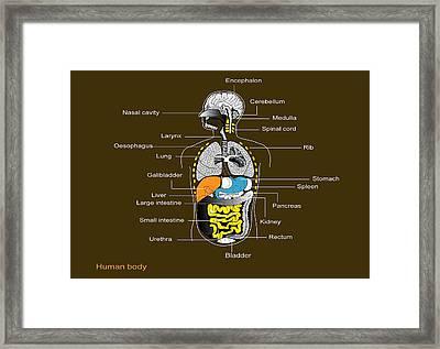 Human Internal Organs, Diagram Framed Print by Francis Leroy, Biocosmos
