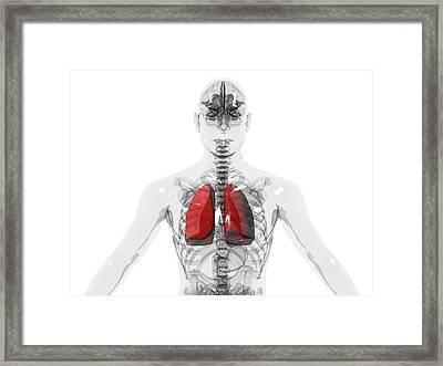 Human Lungs Framed Print by Christian Darkin
