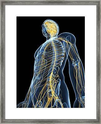 Human Nervous System, Artwork Framed Print by Sciepro