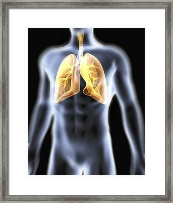Human Respiratory System, Artwork Framed Print by Pasieka