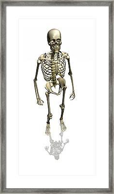 Human Skeleton, Artwork Framed Print by Friedrich Saurer