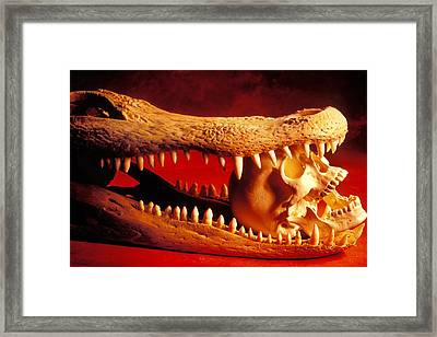 Human Skull  Alligator Skull Framed Print by Garry Gay
