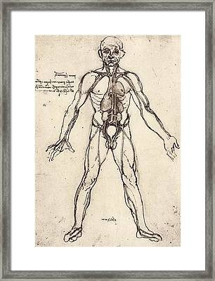 Human Venous System Framed Print by Sheila Terry