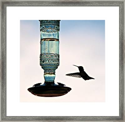 Framed Print featuring the photograph Hummer At The Feeder by Jo Sheehan