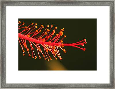 Hummers Delight Framed Print